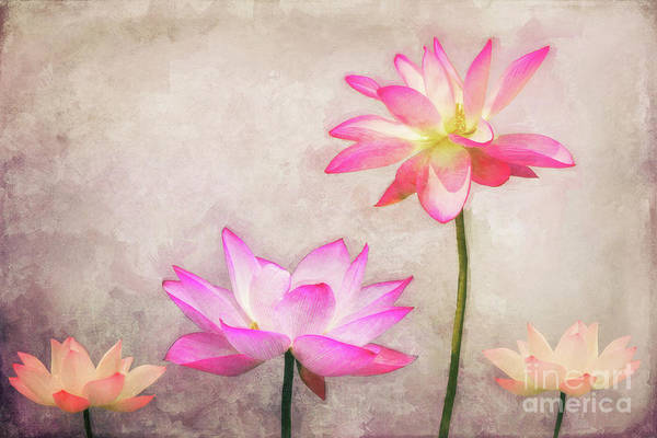 Digital Art - Lotus by Angela Doelling AD DESIGN Photo and PhotoArt