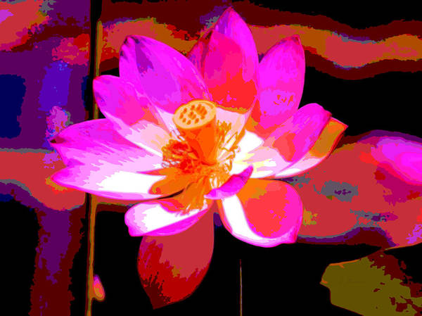 Wall Art - Photograph - Lotus Bloom by L Brown
