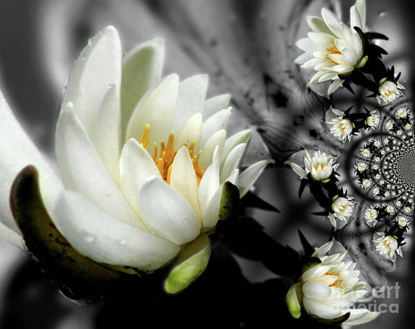 Photograph - Lotus Blossom Abstract by Smilin Eyes  Treasures