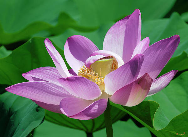 Photograph - Lotus--center Of Being--protective Covering II Dl0088 by Gerry Gantt