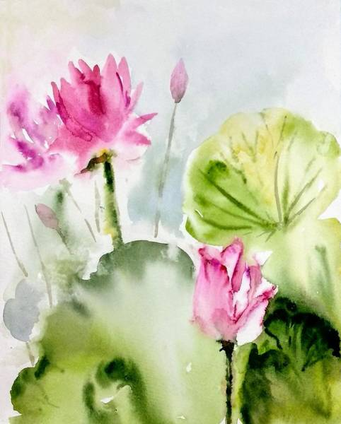 Painting - Lotus Early Morning by Asha Sudhaker Shenoy