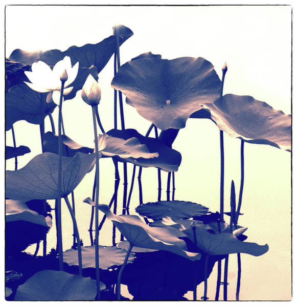 Photograph - Lotus Entwined by Jessica Jenney