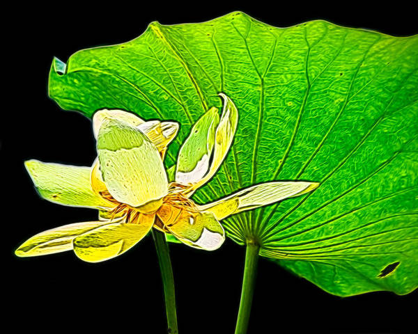 Brazos Bend State Park Wall Art - Photograph - Lotus Flower, Digtal Art by TN Fairey