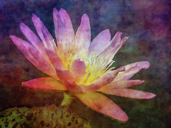 Photograph - Lotus In The Opal 4170 Idp_2 by Steven Ward