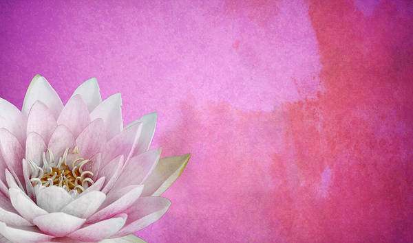 Pink Lotus Flower Photograph - Lotus by Mark Rogan