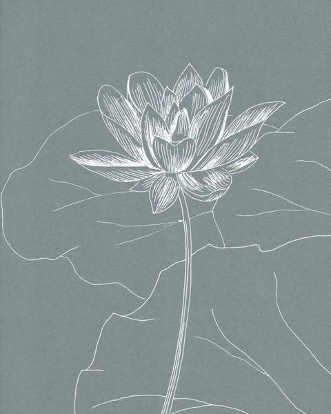 Organic Garden Drawing - Lotus by Masha Batkova