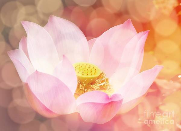 Bokeh Digital Art - Lotus  by Jacky Gerritsen