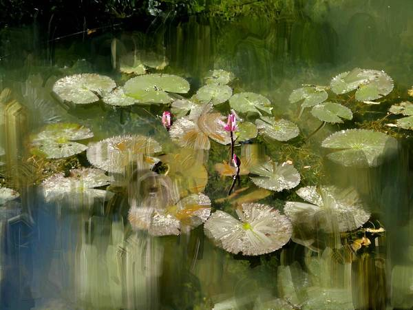 Usha Painting - Lotus Pond 1 by Usha Shantharam
