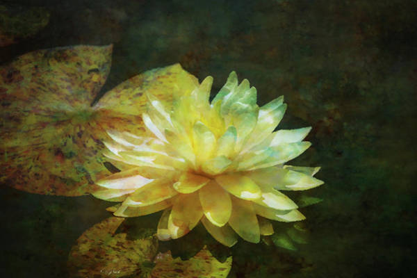 Photograph - Lotus Pool Impression 2935 Idp_2 by Steven Ward