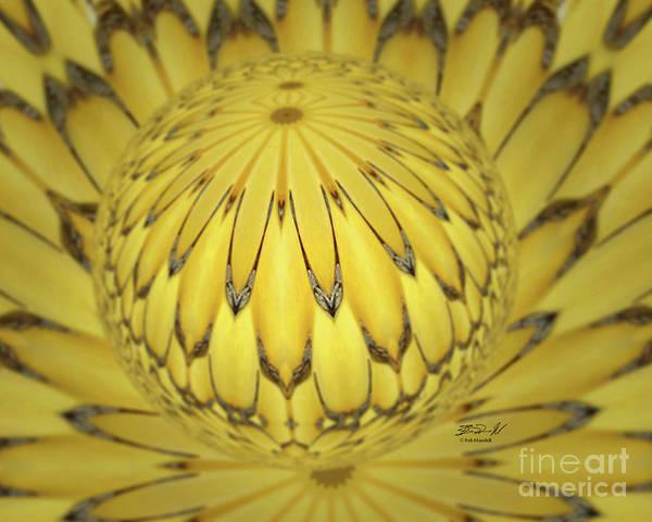 Digital Art - Lotus Sphere by Rob Mandell