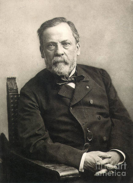 Photograph - Louis Pasteur (1822-1895) by Granger