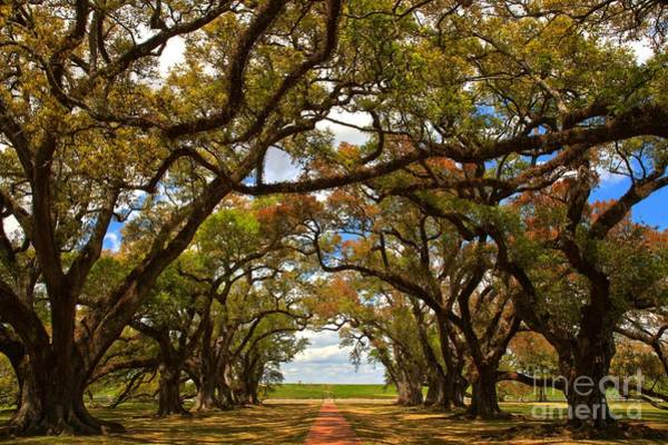 Photograph - Louisiana Avenue Of The Oaks by Adam Jewell