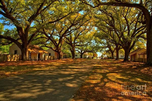 Photograph - Louisiana Plantation Landscape by Adam Jewell