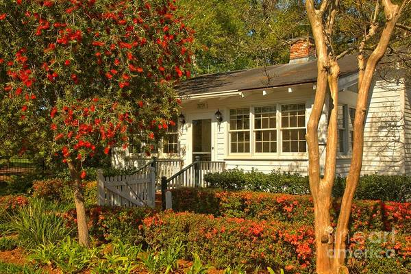 Photograph - Louisiana Southern Comfort by Adam Jewell