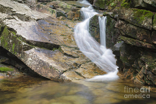 Photograph - Louisville Brook - Bartlett  New Hampshire Usa by Erin Paul Donovan