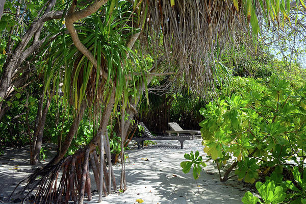 Photograph - Lounge Chairs On The Beach In Maldives With Exotic Vegetation by Oana Unciuleanu