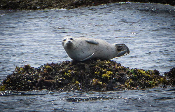 Photograph - Lounging On The Rocks by Marilyn Wilson