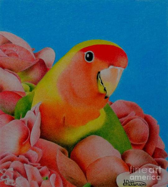 Green Parrot Drawing - Love Bird by Sharon Patterson