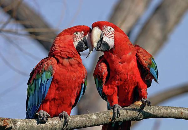 Photograph - Love Birds by Ronnie and Frances Howard