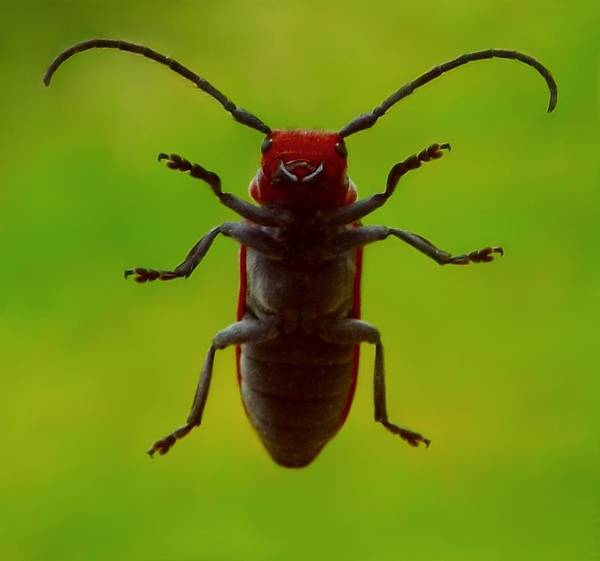 Photograph - Love Bug by Danielle R T Haney