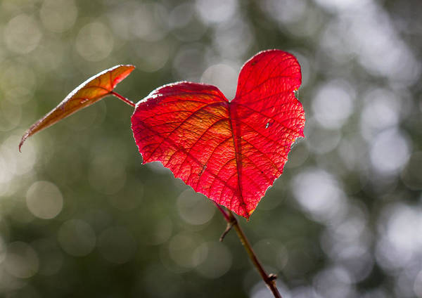 Photograph - Love Heart by Clare Bambers