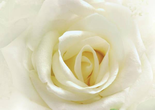 Wedding Gift Digital Art - Love Is As Tender As A White Rose by Isabella Howard