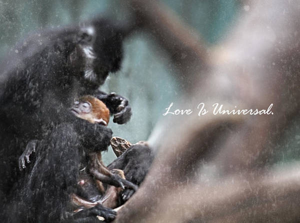 Wall Art - Photograph - Love Is Universal by Celestial  Blue