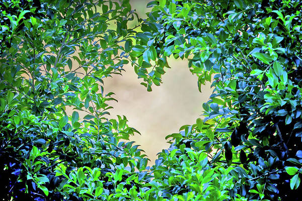 Wall Art - Photograph - Love Leaves by Az Jackson
