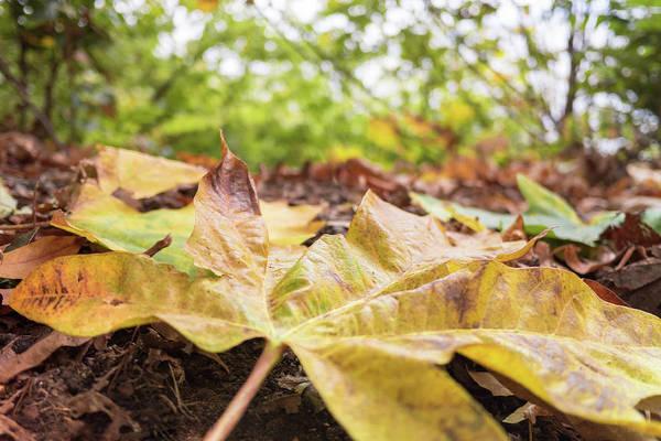 Photograph - Love Leaves by Crystal Hoeveler