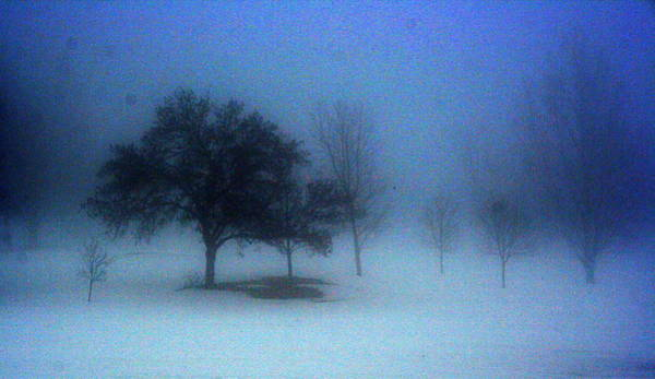 Love In The Mist Photograph - Love Me In The Mist by Julie Lueders