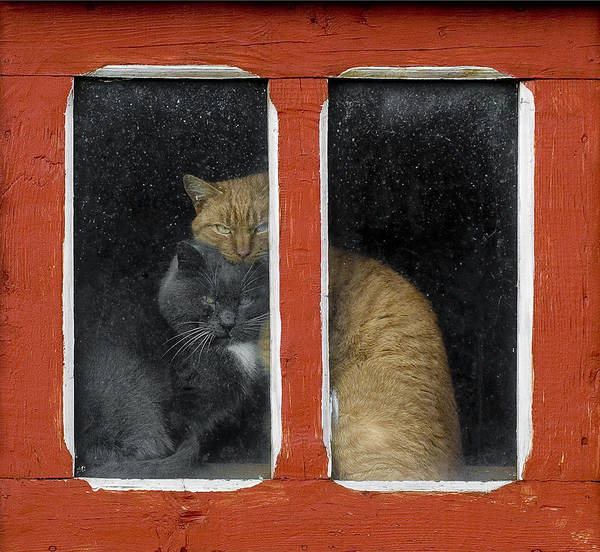 Window Photograph - Love by Mihnea Turcu