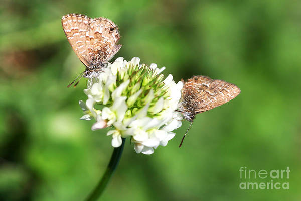 Together Forever Photograph - Love Moths by Jorgo Photography - Wall Art Gallery