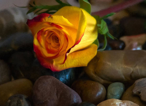 Photograph - Love On The Rocks by Garvin Hunter
