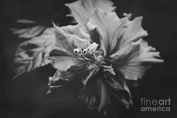Photograph - Love Potion by Sharon Mau