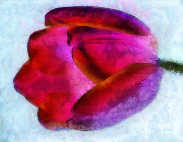 Purple Tulip Photograph - Love Remains by Krissy Katsimbras