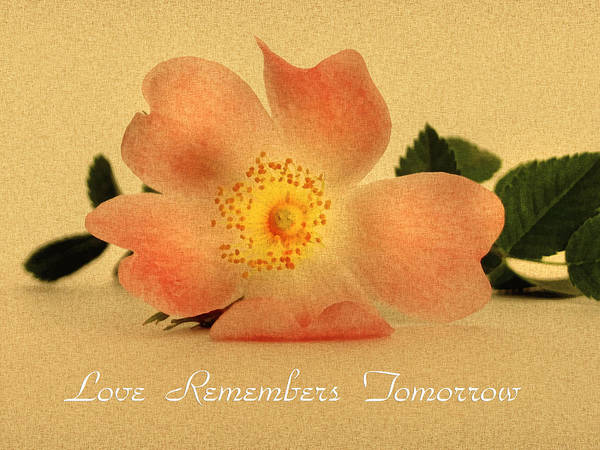 Romantic Flower Mixed Media - Love Remembers Tomorrow by Isabella Howard