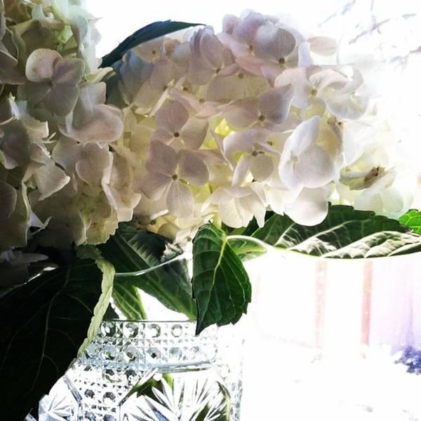 Romantic Wall Art - Photograph - Love These Flowers! #happylaborday by Jennifer Beaudet