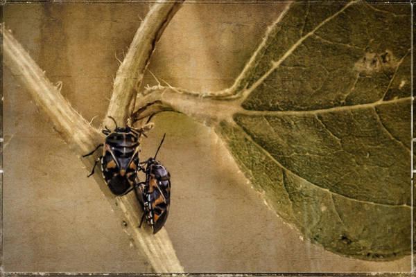 Photograph - Lovebugs Version 2 by Janice Bennett