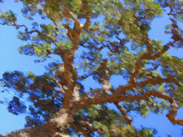 California Oak Digital Art - Lovely As A Tree by Donna Blackhall
