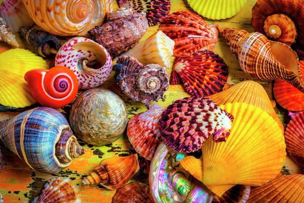 Wall Art - Photograph - Lovely Beautiful Seashells by Garry Gay