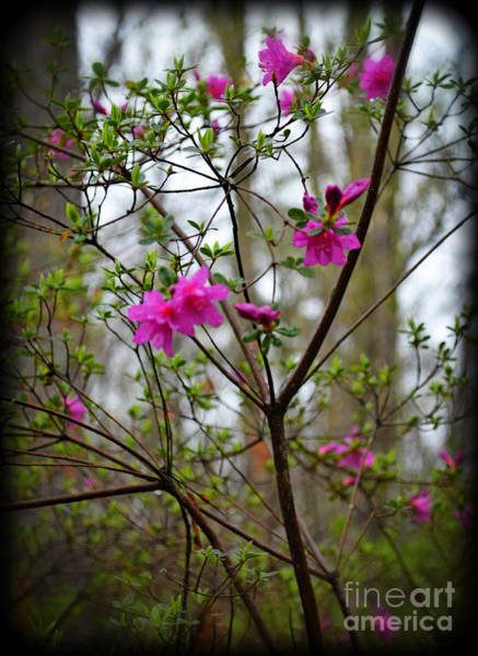 Wall Art - Photograph - Lovely Bright Pink Flowers by Eva Thomas