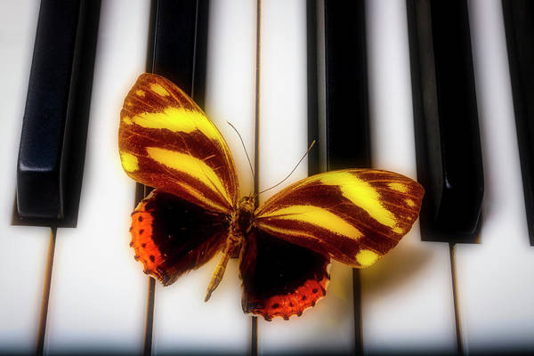 Wall Art - Photograph - Lovely Exotic Butterfly by Garry Gay