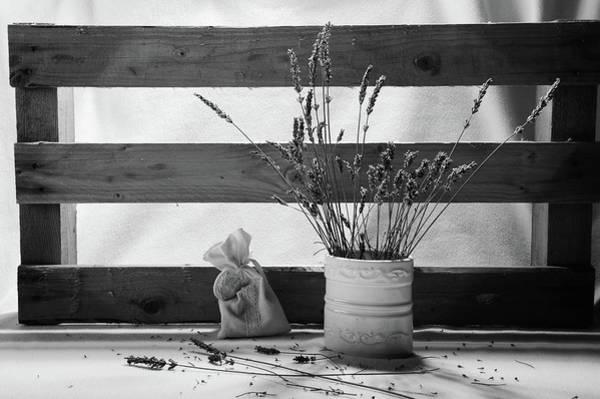 Photograph - Lovely Lavender by Randi Grace Nilsberg