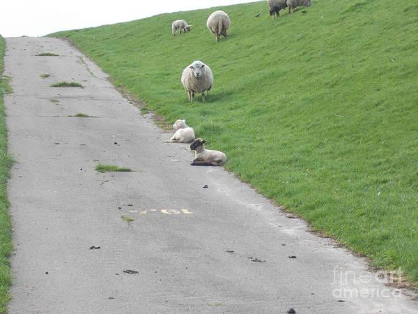 Wall Art - Photograph - Lovely Sheeps by Angelika Heidemann