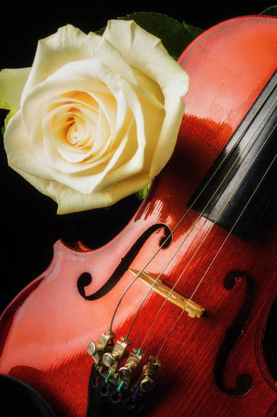 Bluegrass Photograph - Lovely White Rose And Violin by Garry Gay