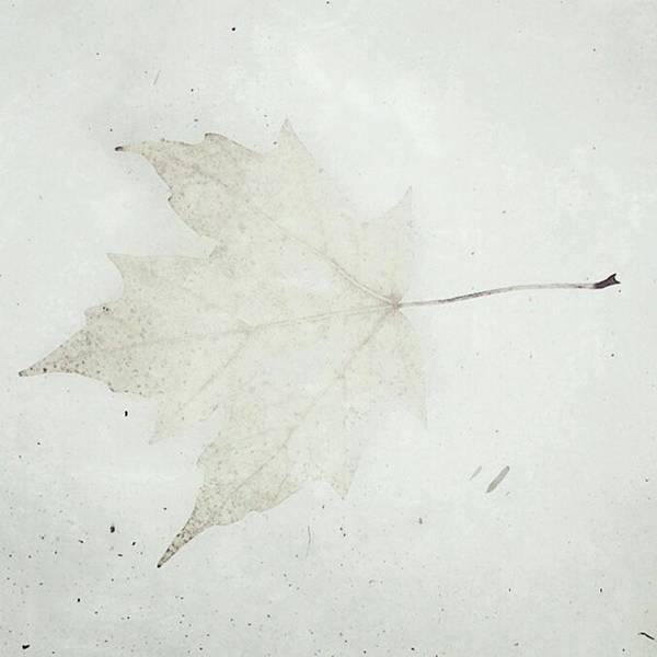 Photograph - #lovelydeadcrap #leaf #stillsnowing by Tricia Elliott