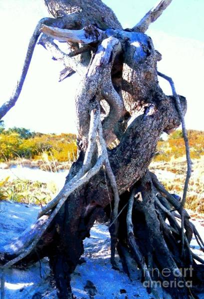 Oceanfront Photograph - Lovers Entwined Beach Driftwood by Janine Riley