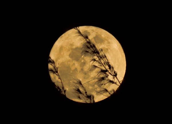 Photograph - Lover's Moon by Pamela Walton