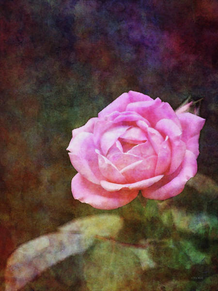 Photograph - Loves Pink 1279 Idp_2 by Steven Ward
