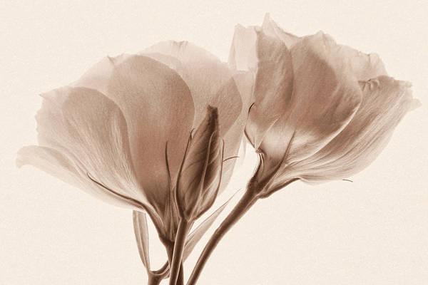 Photograph - Loving Memories by Leda Robertson